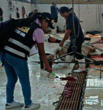 Fiscalía constata condiciones insalubres en camal municipal de Chimbote 7