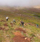 Áncash: Agro Rural instala 55 mil plantones ante lluvia y heladas