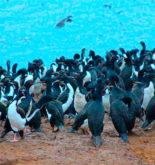 hallan más 400 aves marinas muertas en Huarmey presuntamente para consumo humano